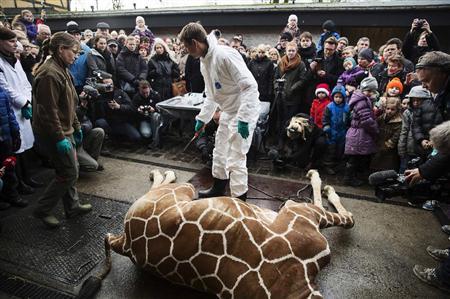 【閲覧注意】動物園でキリンを来園客前で解体、ライオンの餌に・・・・・・・・・