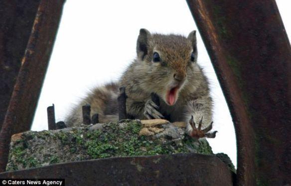 最高に可愛い動物の画像下さい!