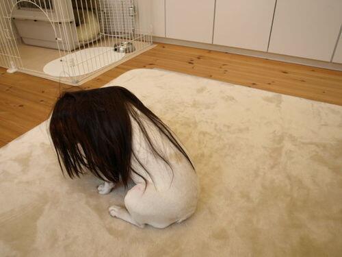 【画像】犬にハガレンのコスプレさせた結果wwwwwwwwwww