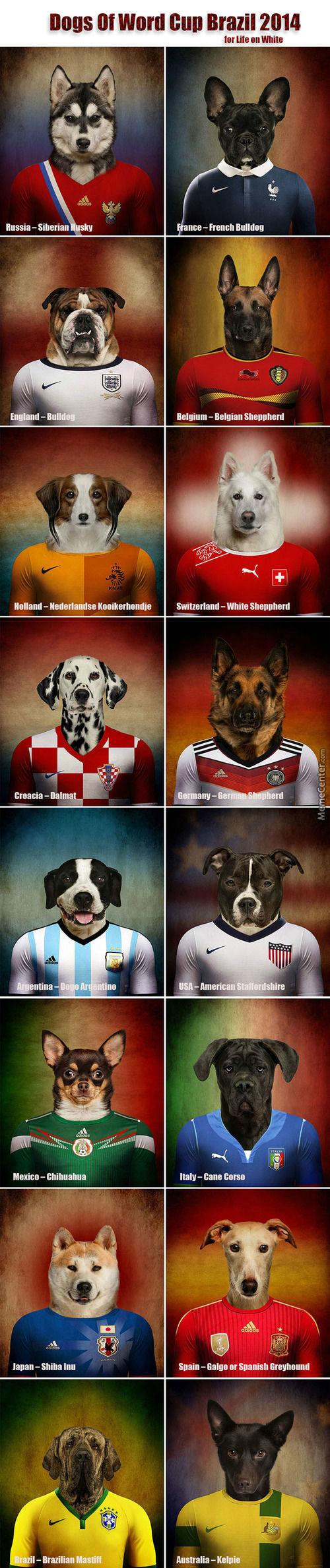 犬種ワールドカップ