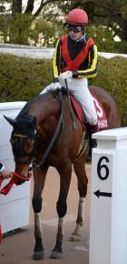 【競馬】 ジェンティルドンナが今検索してそうなワード