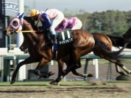 【競馬】 牝馬だと思ってたら、牡馬だった馬挙げてけ