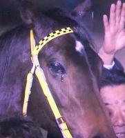 【競馬】 ブエナビスタってすげえ不運な馬だよな…