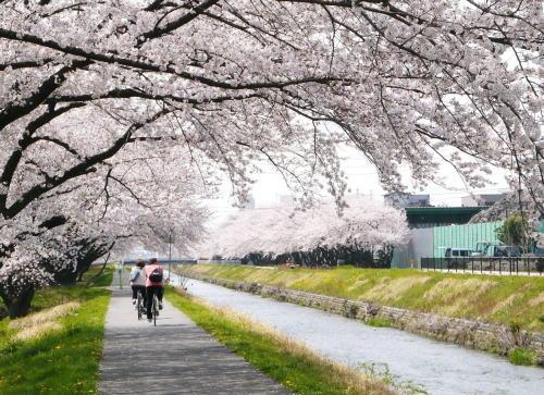 【画像】 春めいてきたね。 自転車写真部まとめ (14.03月下旬~GW明け)