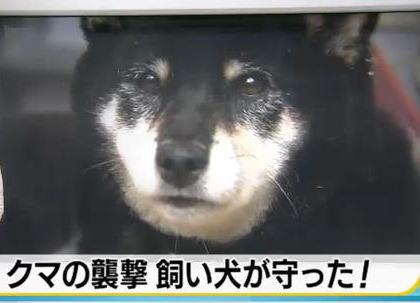 犬の散歩をしていた男性(63)、子持ちのクマに襲われ頭を噛まれるが、飼い犬が立ち向かい追い払う - 石川・金沢