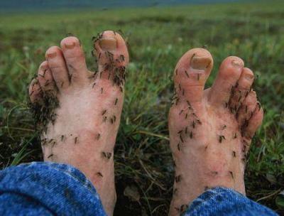 「今年は蚊に刺されない」「蚊がいなくなっている」 蚊の数が減っている? … 年毎にばらつきがあるものの、捕獲数は10年間で3分の2に減少という調査結果も