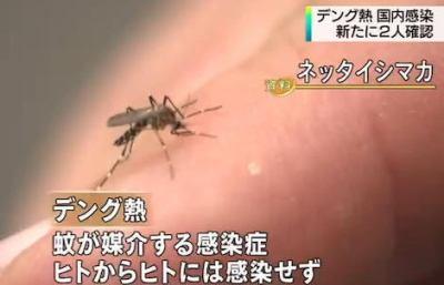 蚊が媒介する「デング熱」 都内で海外渡航歴の無い男女2人が新たに感染 … 代々木公園で蚊に刺されたか、東京都は念のため公園内で蚊の駆除を実施