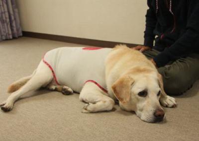 埼玉で盲導犬「オスカー」が何者かに刺された事件、20歳前後の長髪茶髪の男が、南越谷駅から東武新越谷駅のホームまで他の盲導犬の後をつけていた、との目撃情報