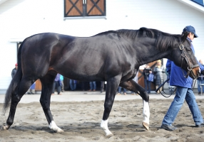 【競馬】 砂の名種牡馬アジュディケーティングが死亡… 28歳
