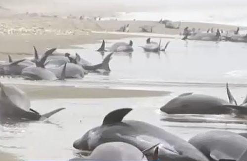 朝日新聞 素粒子 「茨城の浜に打ち上げられたイルカたち。弾圧から逃れてきた難民のようにも見え。」