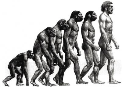 『進化論』が正しいならなんで生物は睡眠を必要とするんだろうな・・・