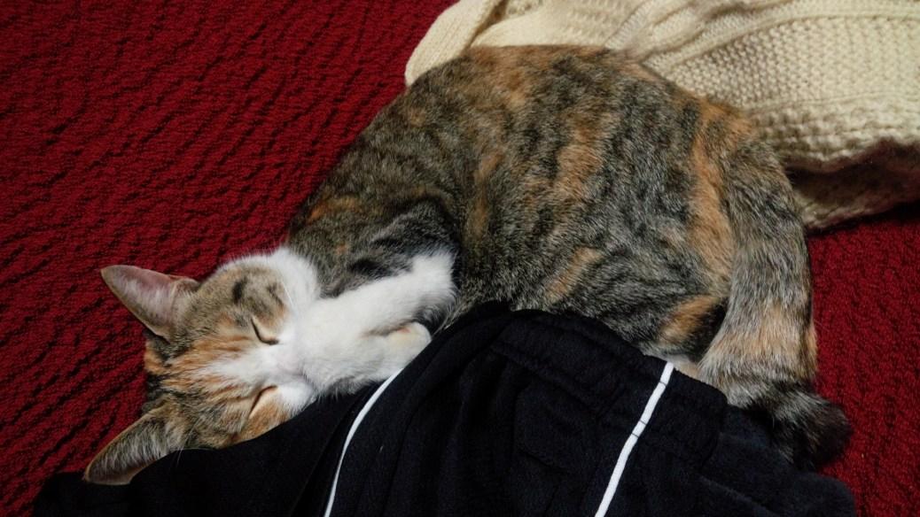 【悲報】家の猫を隣家のJSに寝取られたwwwwwwwwwwwwwww(画像あり)