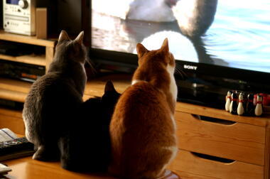 1日のテレビ視聴時間がゼロ~2時間未満の人の割合、調査開始以来初めて増加。若年層に限らず全ての年代で上昇 … NHK放送文化研究所、テレビの視聴傾向の調査結果を発表