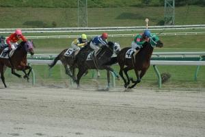 【競馬】 スター日本人騎手が居ない、育たない ←これのだからどうした感は異常