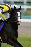 【競馬】 イスラボニータ、ルメール騎手とのコンビ復活で富士Sへ