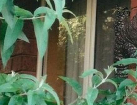 80歳の爺さん、自宅の玄関の壁にでっかいトカゲがへばりついているのを見て、寿命を縮ませる(画像) - 豪