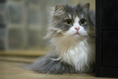 3000円のイヤホンを猫に齧られたから1万円のイヤホンに買い換えたったwwwwwwwwwwwwwwww