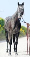【競馬】 エイシンヒカリが芦毛っぽくなってきた件