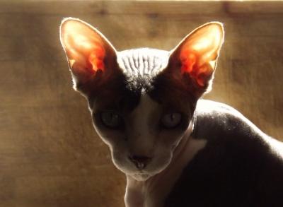カスタムイヤホンがイヤホン界の頂点になれない理由。 耳は日々変形している?