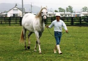 【競馬】 ウィナーズサークル死亡 89年の日本ダービー馬