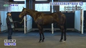 【競馬】 さあ 最強ディープ産駒ザウォルドルフのデビュー戦が始まるぞ!!!