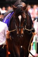 【競馬】 キタサンブラック、秋は天皇賞→JC→有馬の王道GI3連戦!
