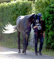 【競馬】 エイシンヒカリ陣営「最近は自分から襲いかかる様なしぐさを見せる」