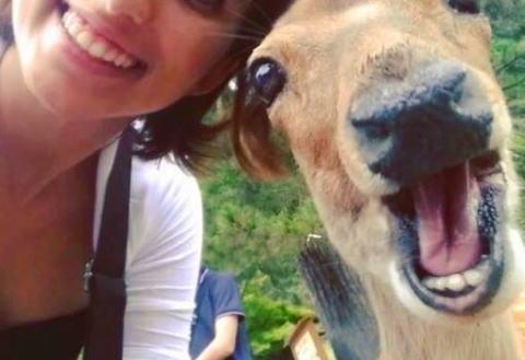 観光客の自撮りにうんざりする奈良公園の鹿 「鹿の本音が表れている」写真が話題
