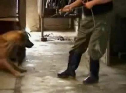 動物虐待になる?迷子のペット犬を捕まえて食べた韓国人らが物議「管理を怠った飼い主が悪い」