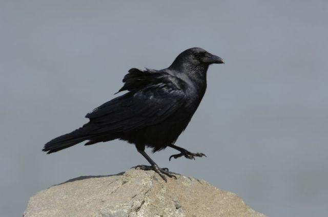 11-4-12-F02 [Mystery Bird B]