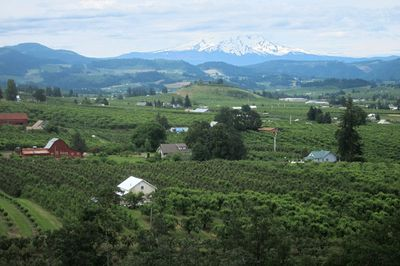 Orchards in Hood River County