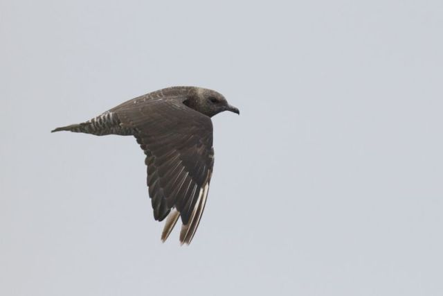 12-3-13-F03 [Quiz Bird C]