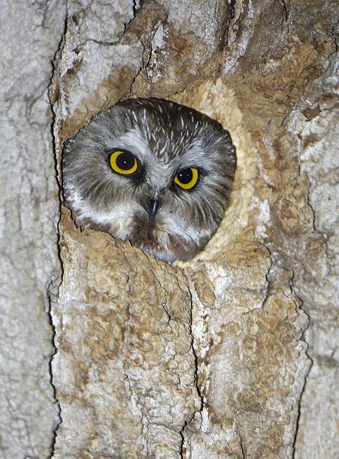 NSWO_nest1