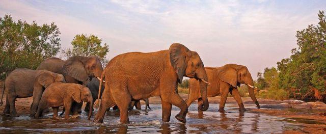 African Elephant herd by Marius Coetzee thumb X