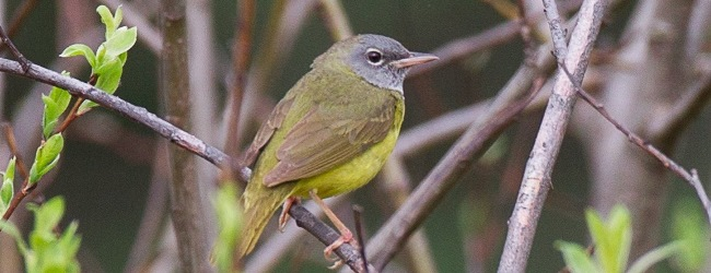 New Photo Quiz: September/October 2013 Birding