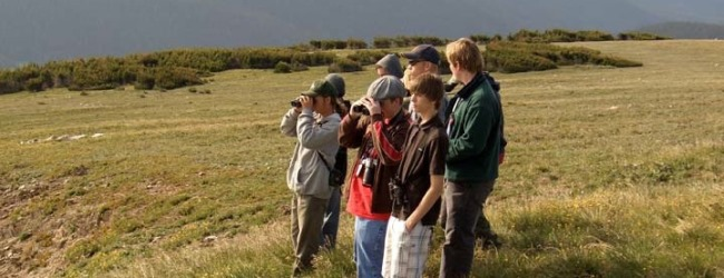 Advice to a Young Birder