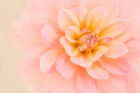Tip 3 Kathleen clemonsWhisper in Pink site copy