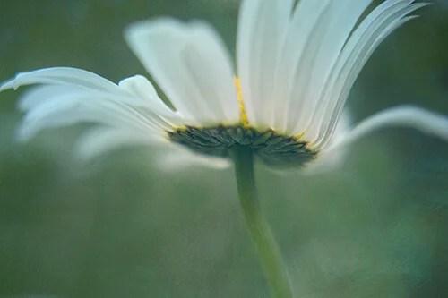 Tip 5 kathleen clemons Dancing Daisy web