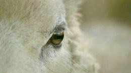 animal-263461_1920