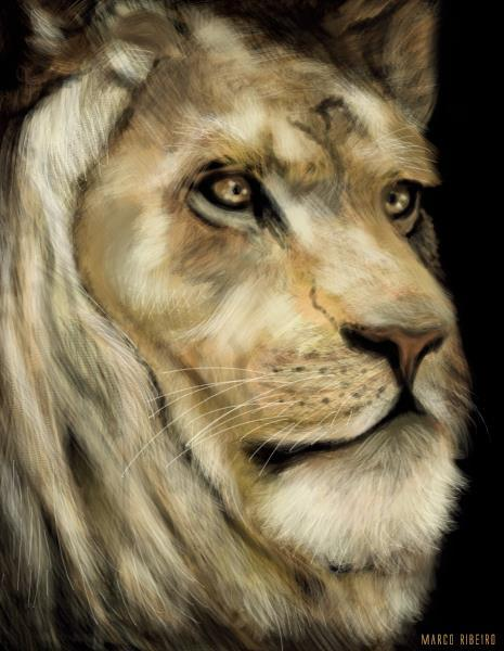 Lion Practice by Marco Zeek Ribeiro