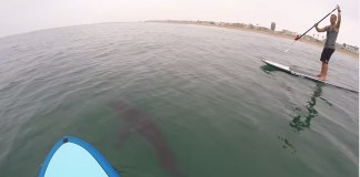 stand up paddle requin