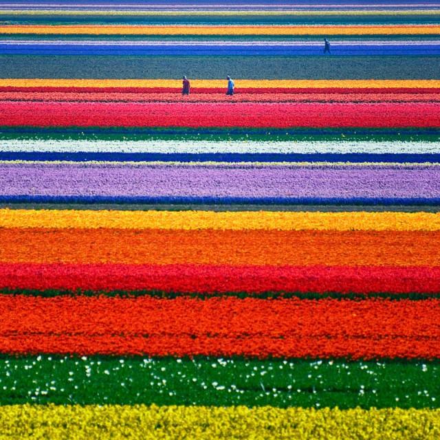 Olanda; sursa foto - Allard Schager