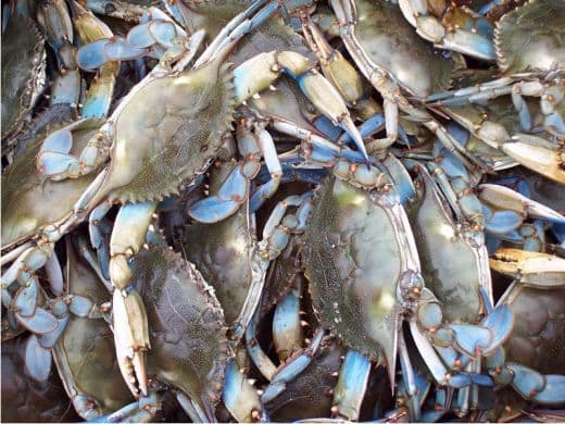 Baltimore Blue Crabs