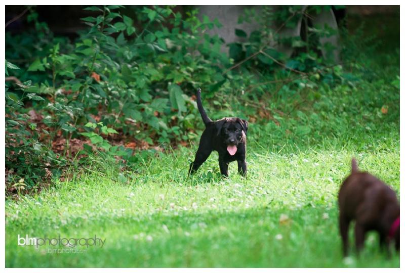 Webber-Puppies_072115-4149.jpg