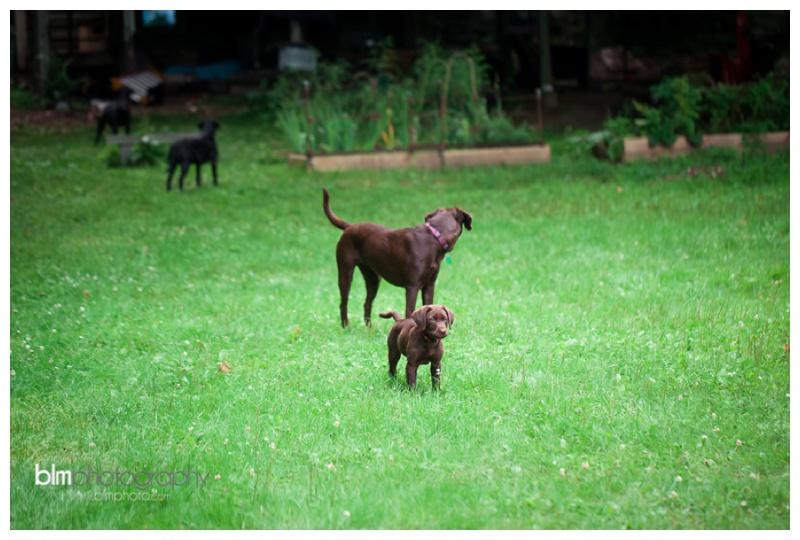Webber-Puppies_072115-8103.jpg