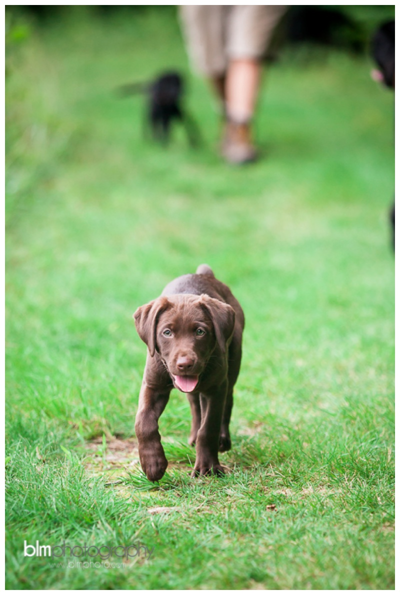 Webber-Puppies_072115-8152.jpg