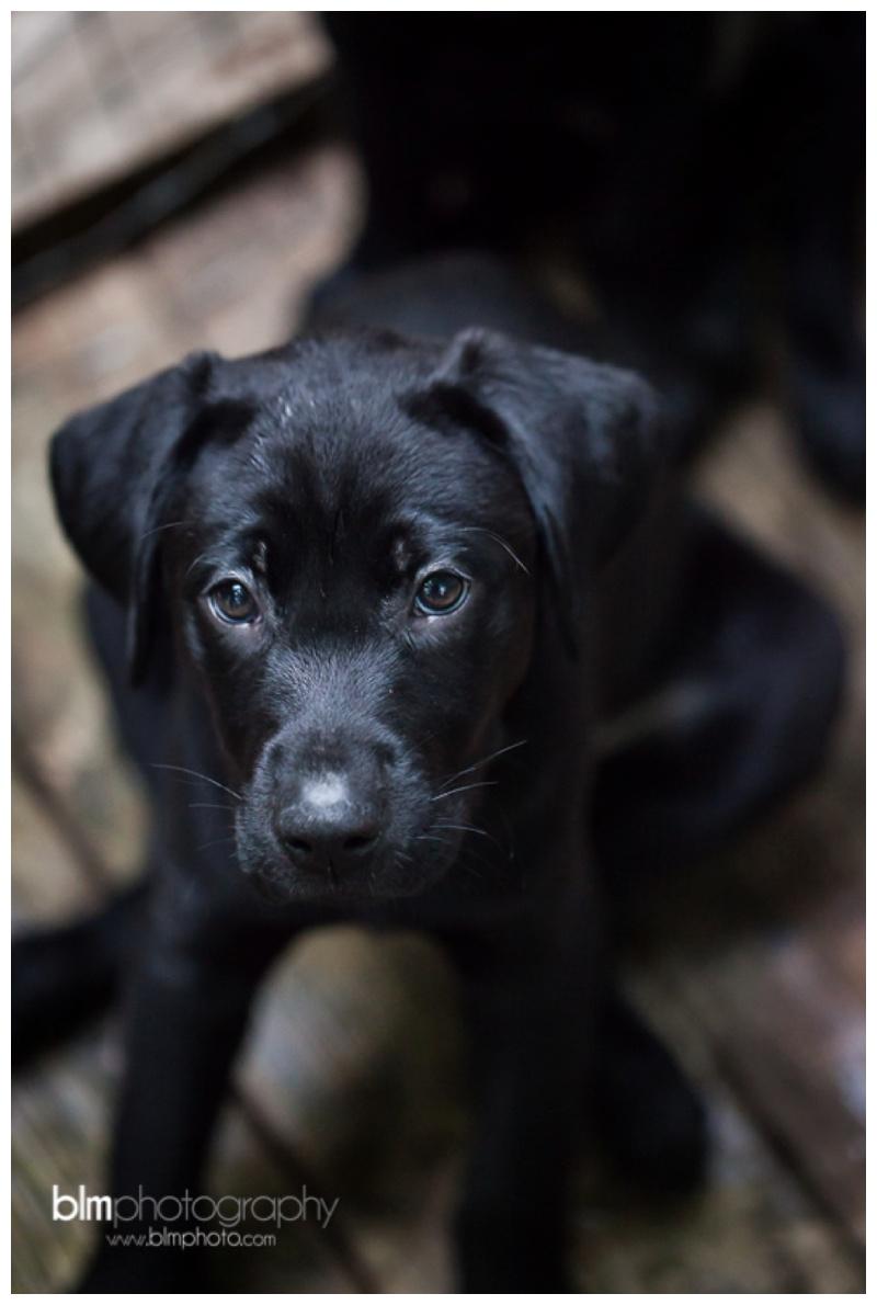 Webber-Puppies_072115-8304.jpg