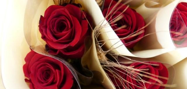 Rosa para Sant Jordi