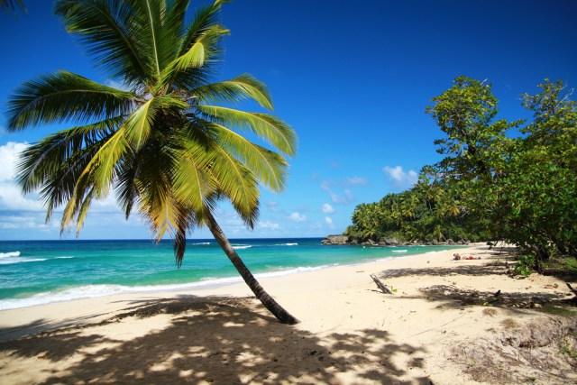 Foto Caribe, Plamera, Playa, Vacaciones en el Caribe 2015