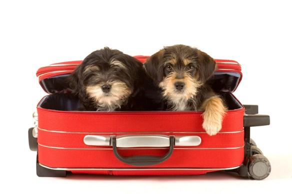 Perros listos para las vacaciones